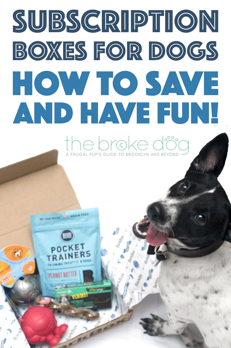 The Broke Dog: How to Save and Have Fun With Dog Subscription Boxes!