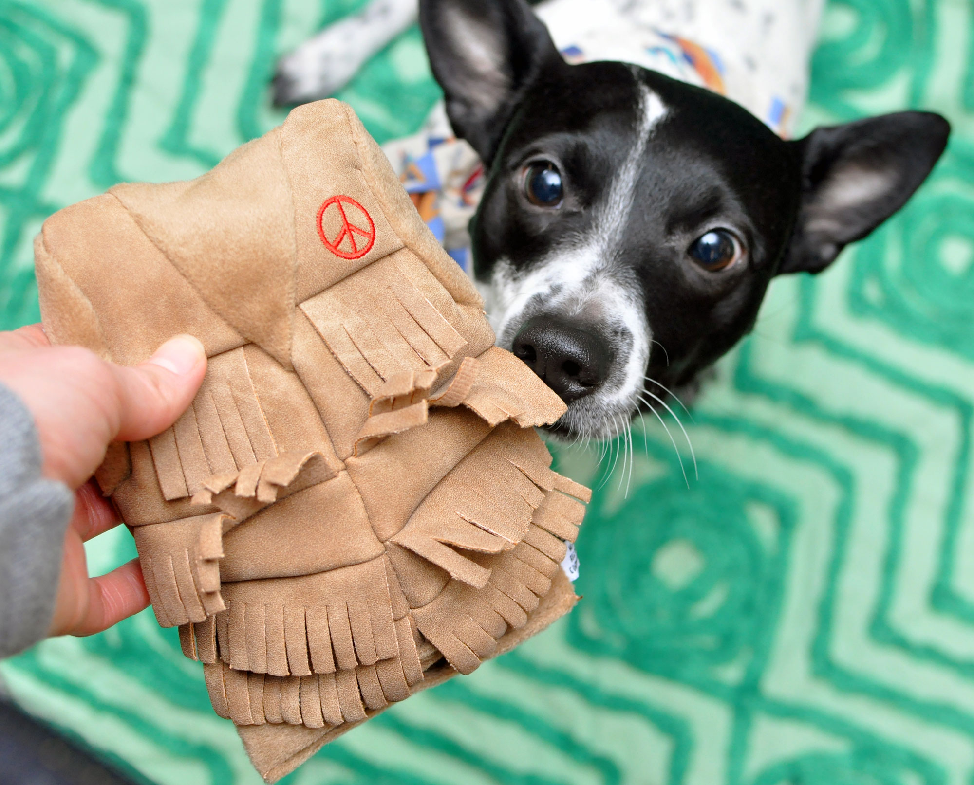 The Broke Dog: January 2016 BarkBox Unboxing