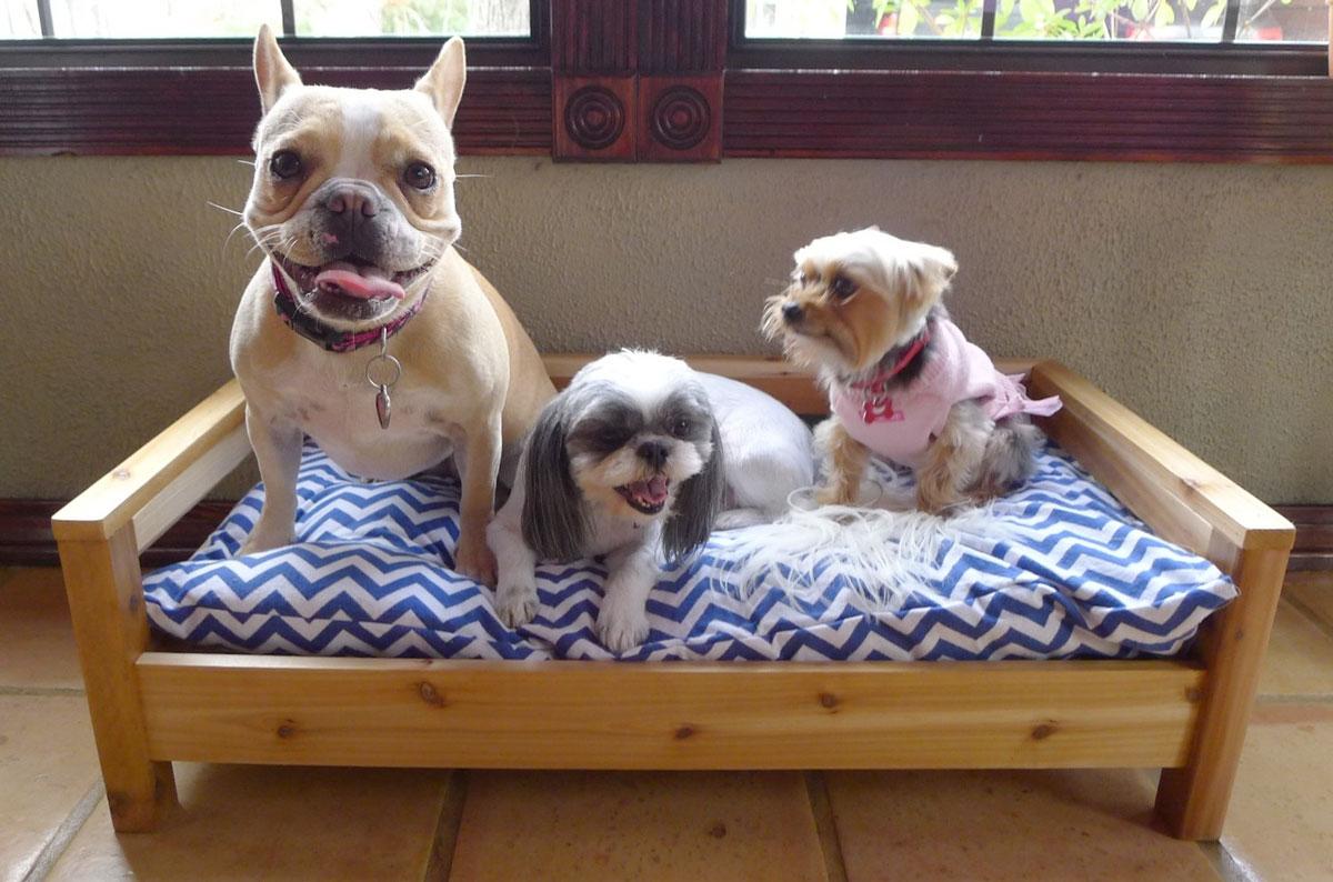 Cozy Cama Small Business Spotlight on The Broke Dog