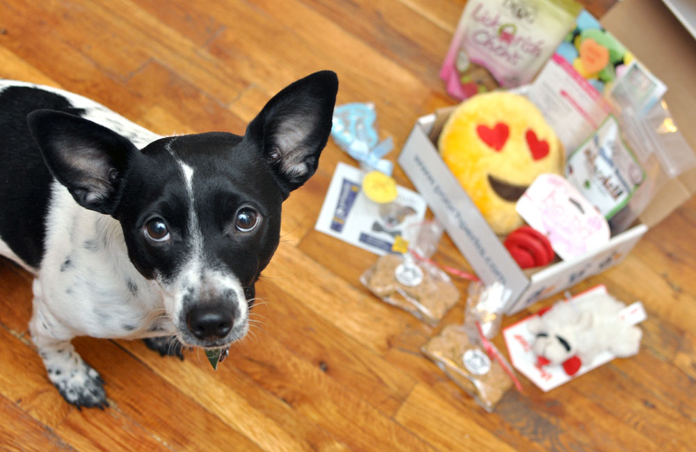 The Broke Dog: Pooch Perks February Box Unboxing and Review