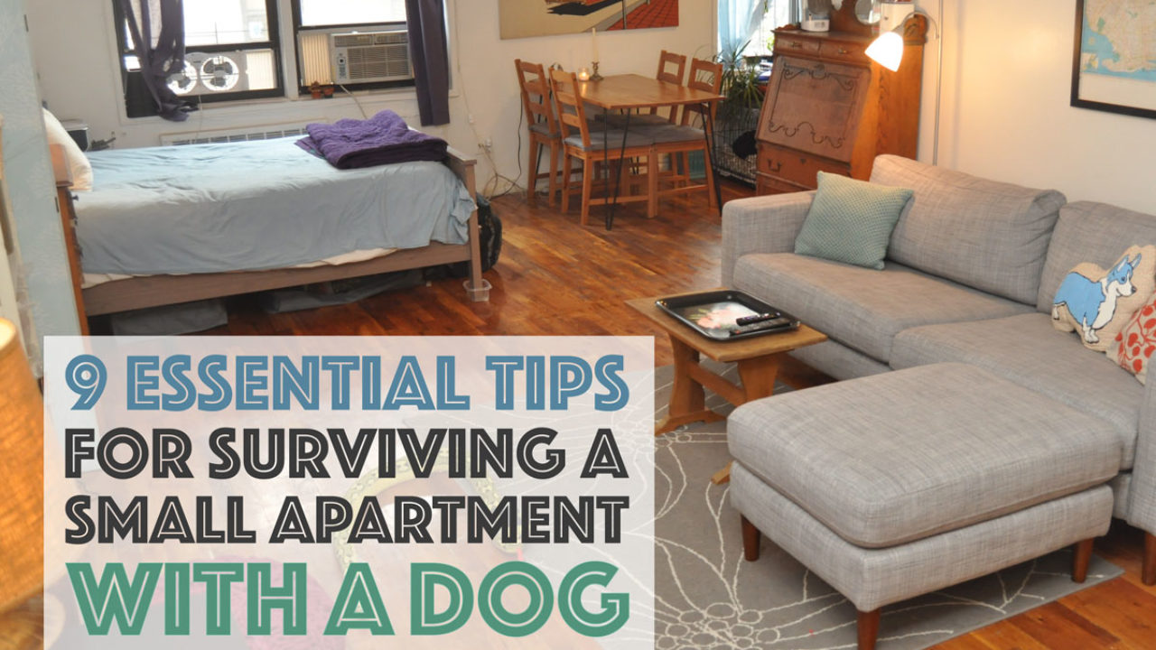 9 Essential Tips For Surviving A Small Apartment With Dog The Broke