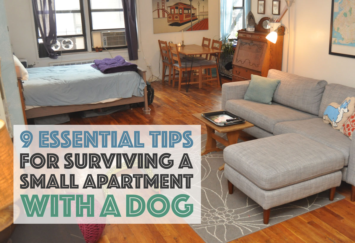 Do You Share A Small Apartment With Dog It Doesn T Have To