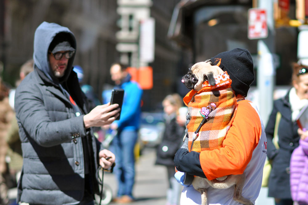 Hundreds of attendees (both animal and human) came out to the first NYC Paws Parade to celebrate the ASPCA's 150th anniversary! Check out our photo gallery for adoptable dogs, costumed dogs, and even a celebrity dog or two!