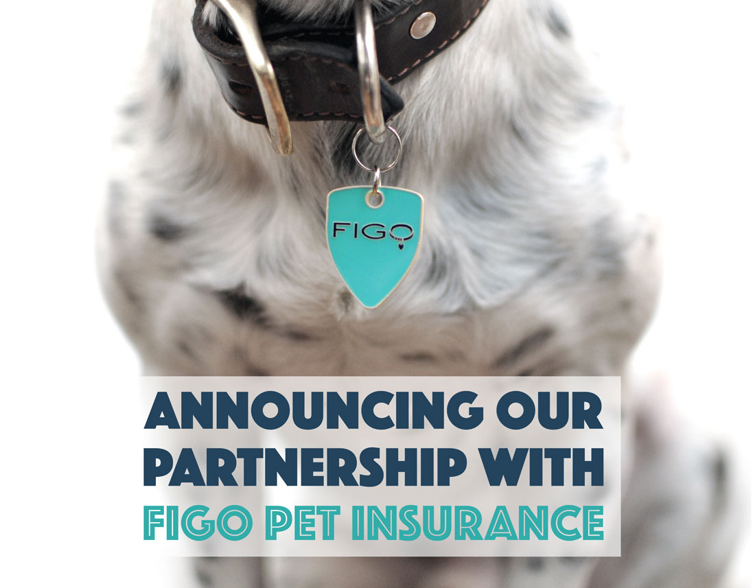 Announcing our partnership with Figo Pet Insurance to bring you great pet insurance at a discounted price!