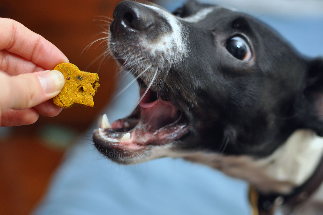 From Nuggie with Love LLC specializes in holistic, artisanal dog treats and premium all-natural pet care products. Henry and I interview the founder, Alley, and give some of their treats a test run!