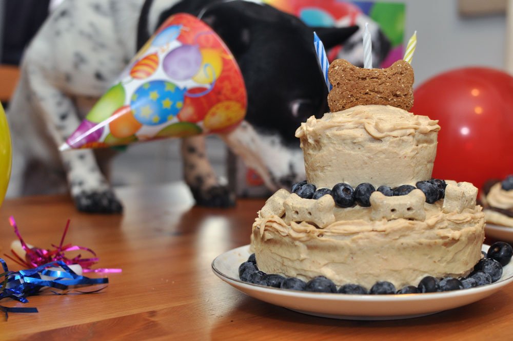 Have a doggie birthday coming up? Don't know to start? HAPPY ARFDAY is the cake mix for you!