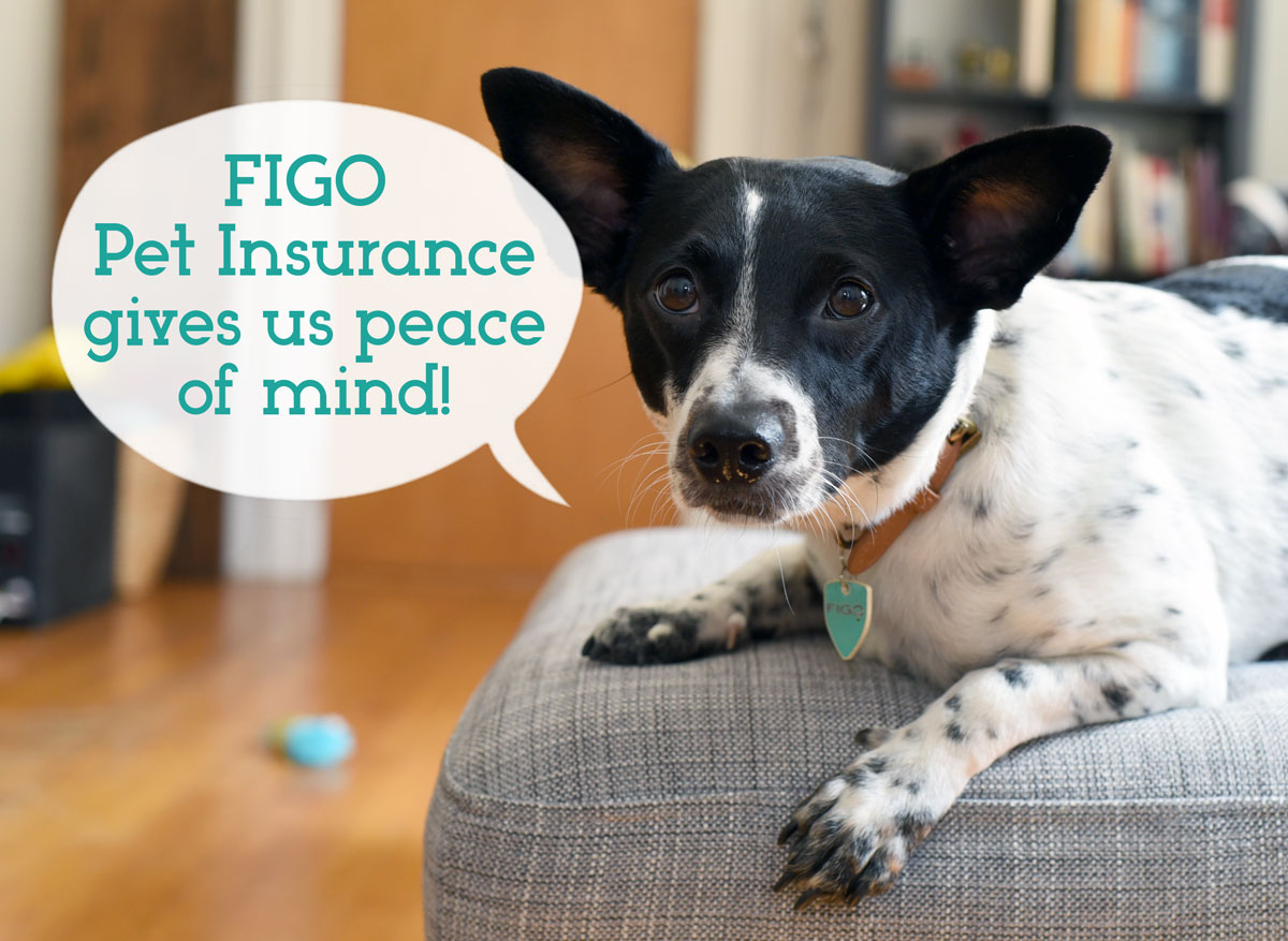 If you follow The Broke Dog, you know that I LOVE to blab on about how much I love Figo Pet Insurance and the peace of mind it gives me!