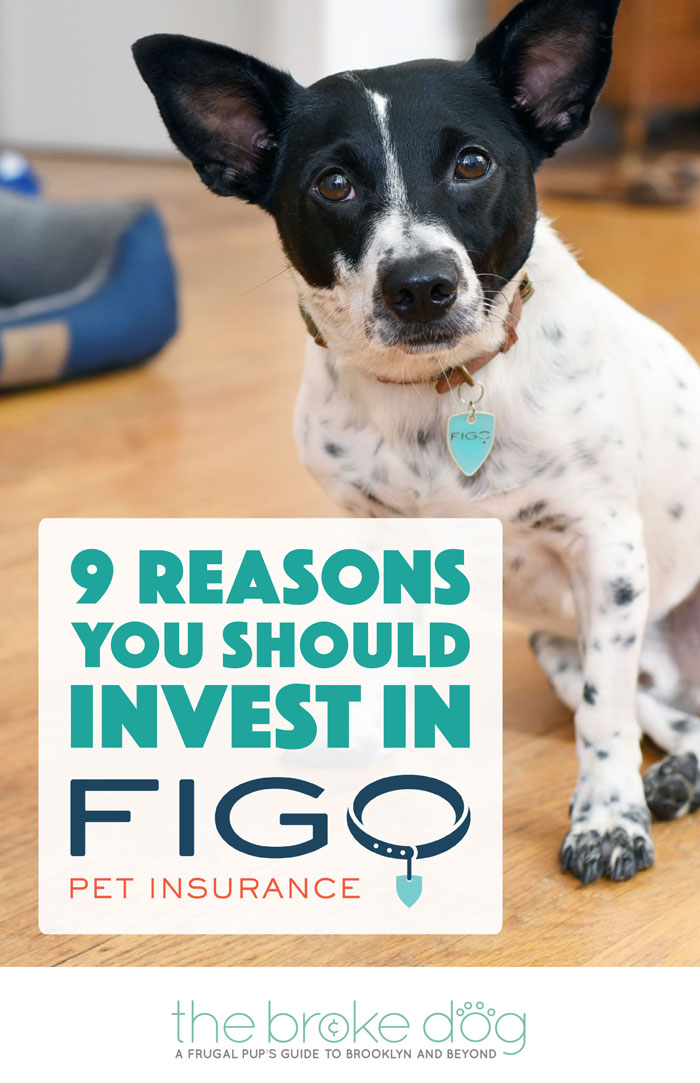 Why do I love Figo Pet Insurance? Let me count the ways... Here are 9 reasons why I think Figo is the best pet insurance for today's pet owners!