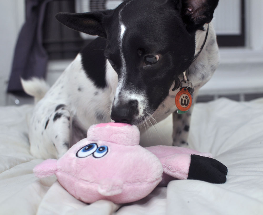 The Hear Doggy!™ is a dog toy with an ultrasonic squeaker that your dog can hear but that you can't! We gave it a test run, and discovered that it's a great toy for apartment dwellers or anyone who values a little bit of quiet.