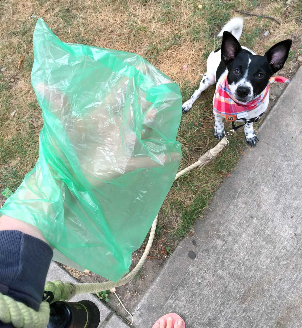 When Stacy Lu from Las Vegas walked her Shih Tzu, Kahlua, she noticed that many dog owners dealt with the same problem she did: running out of poop bags with no warning! To make life easier for pups and their humans everywhere, she designed Kahlua's Scented Scoopers, new poop bags with countdown warning stickers for the last three bags.