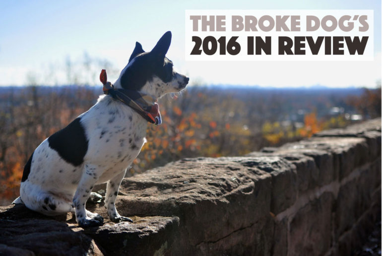 Well, another year over! 2016 was a big one for The Broke Dog, so let's take a quick trip down memory lane. Enjoy this quick Year in Review that touches on some — but not all — of the exciting things that happened this year for me, Henry, and The Broke Dog.