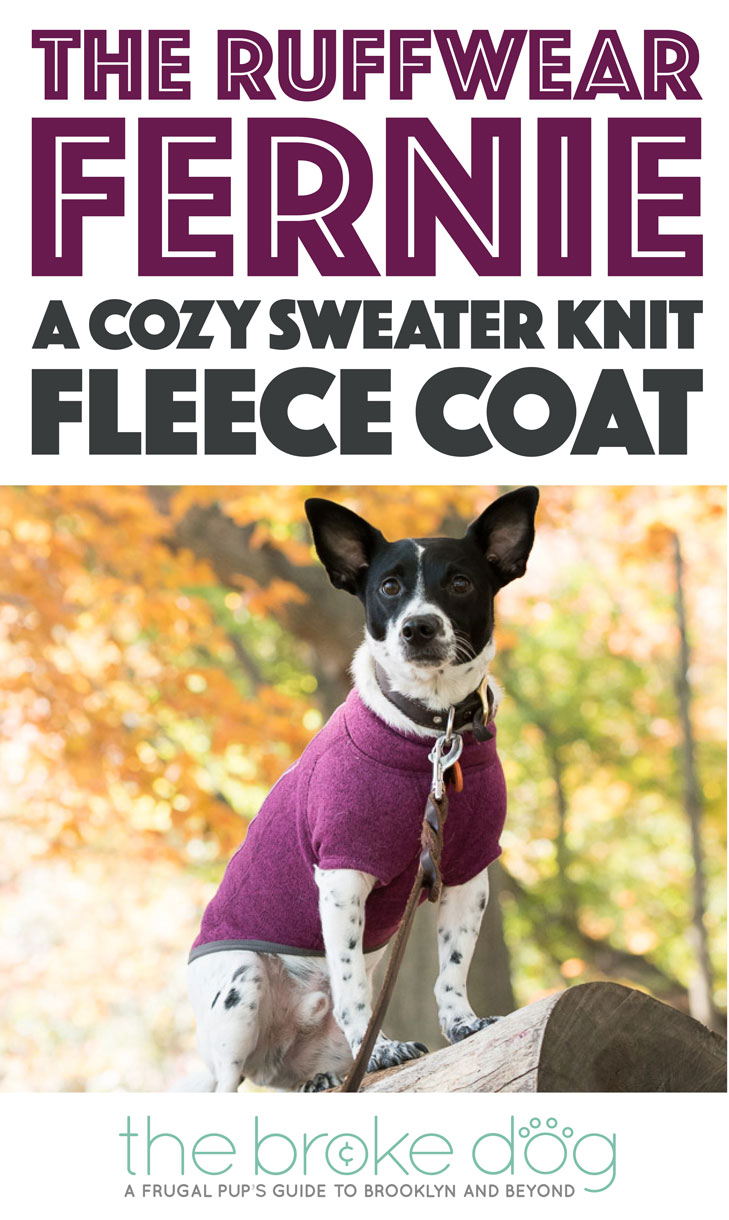 The Ruffwear Fernie Fleece is a cozy, well-made coat that any active dog would love!