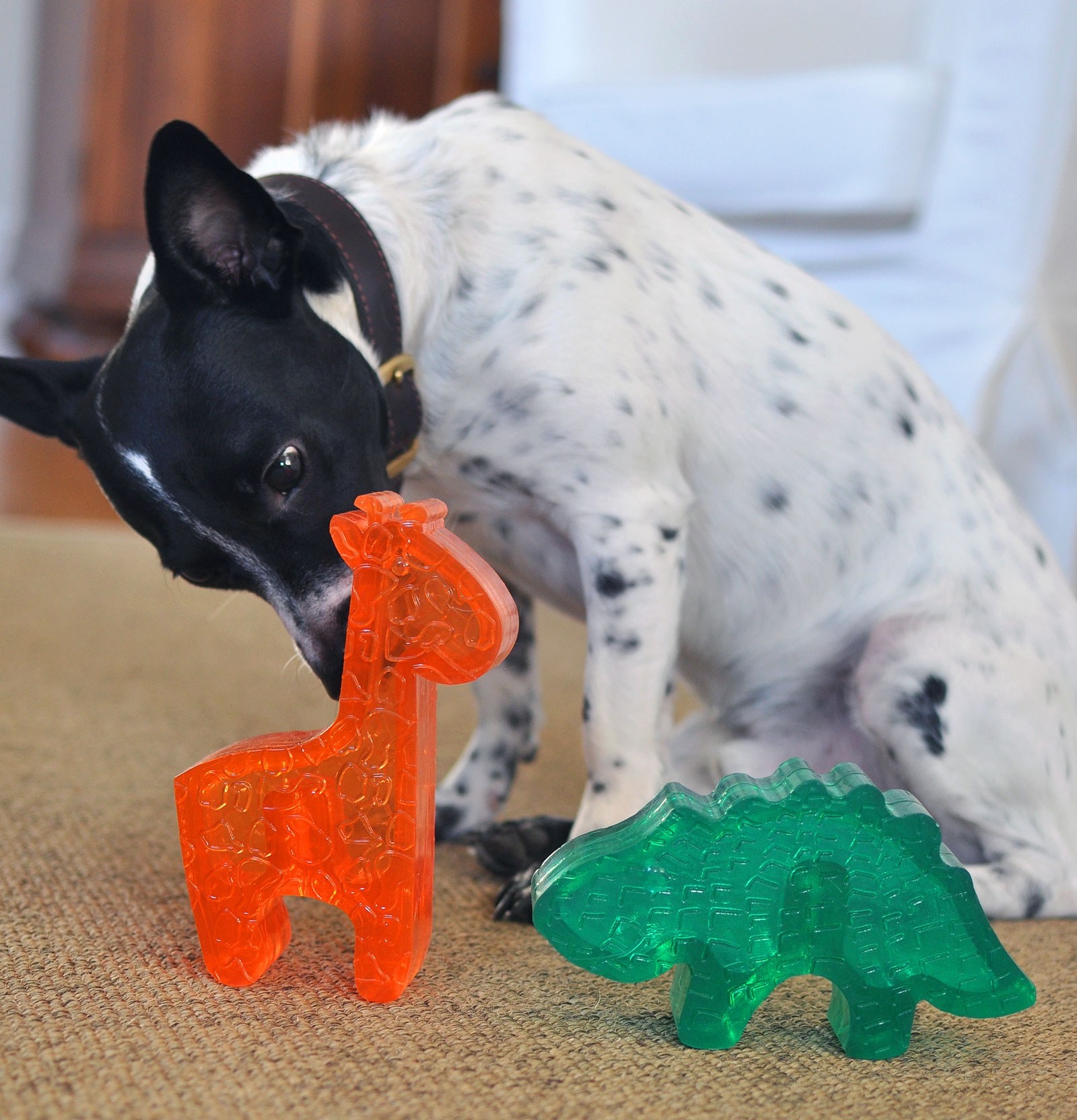 The new Kong Squeezz Zoo line is an adorable and colorful addition to Kong's line of incredible toys!