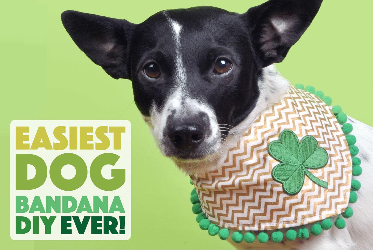 Easiest Dog Bandana Diy Ever The Broke Dog