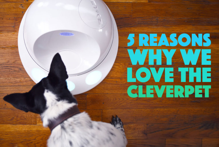Do you work? Yup, I thought so. We all need to support ourselves! I happen to love my job, but that doesn't mean Henry appreciates that I leave the house for hours at a time. We tried the CleverPet, a smart device that acts like a doggie game console, to see if it would help. Did it? Check out our CleverPet review!