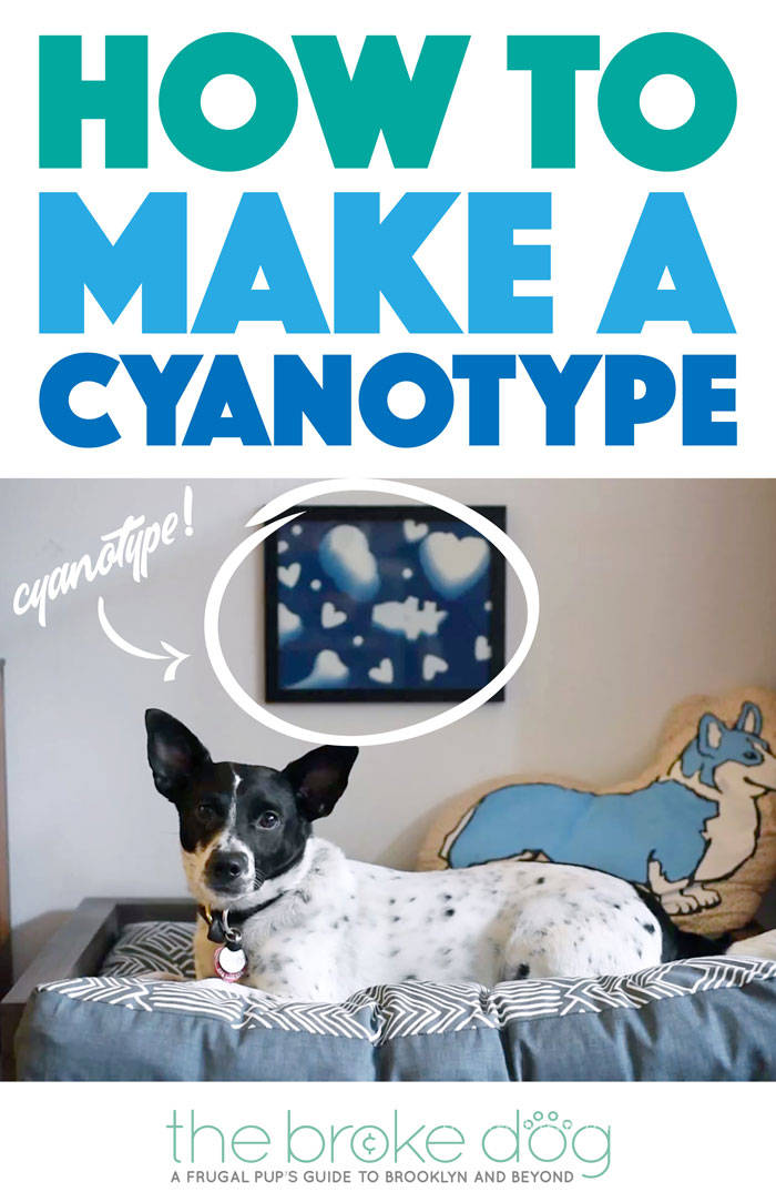 Check out how to make a cyanotype and make your own adorable dog-themed print to hang above your dog's bed!