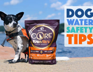 Does your dog like to swim? Will you be spending time by the water? Don't jump in until you've read our dog water safety tips!