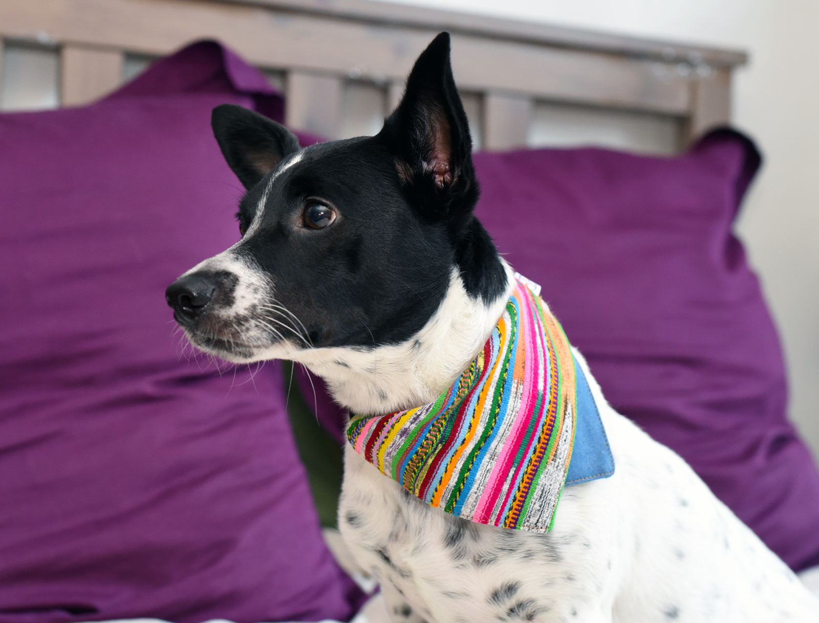 Looking for a stylish gift for a dog-loving friends?Jazal Color makes stunning dog bandanas from handwoven Guatemalan textiles. Learn more about this great company and their incredible products!