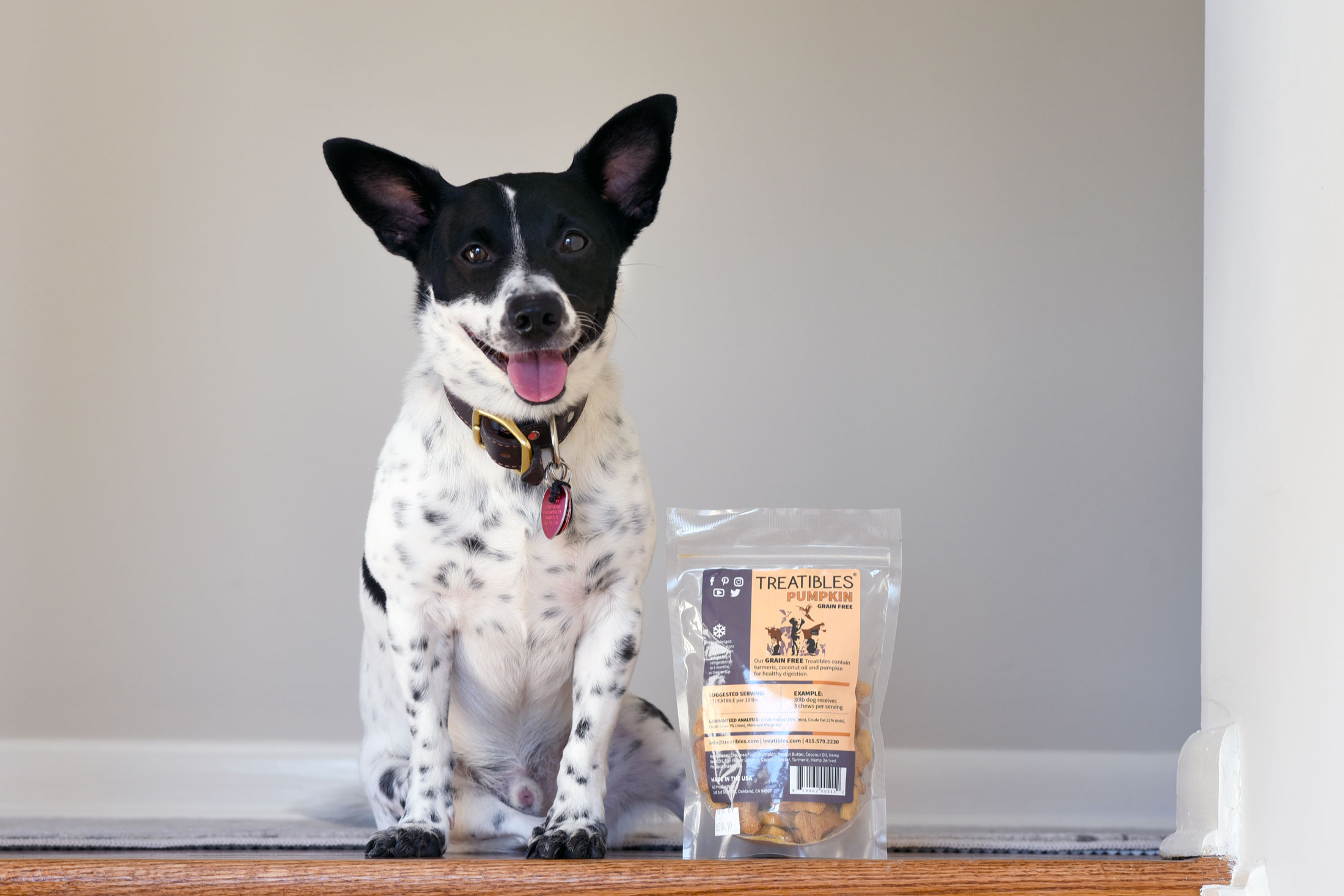 Have you heard the buzz about using hemp for dogs? Learn more about CBD for reactive dogs and how Treatibles is helping Henry!