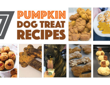 Fall is coming — and that means pumpkins flavored everything.Your dogs don't have to miss out! Check out seven of my favorite pumpkin dog treat recipes from my fellow dog bloggers.