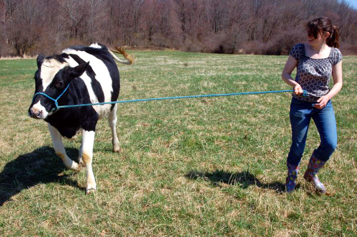 Years before my dog's training classes and medications, there was a cow. Her name was Peaches, and she taught me a surprising lesson about training my reactive dog.