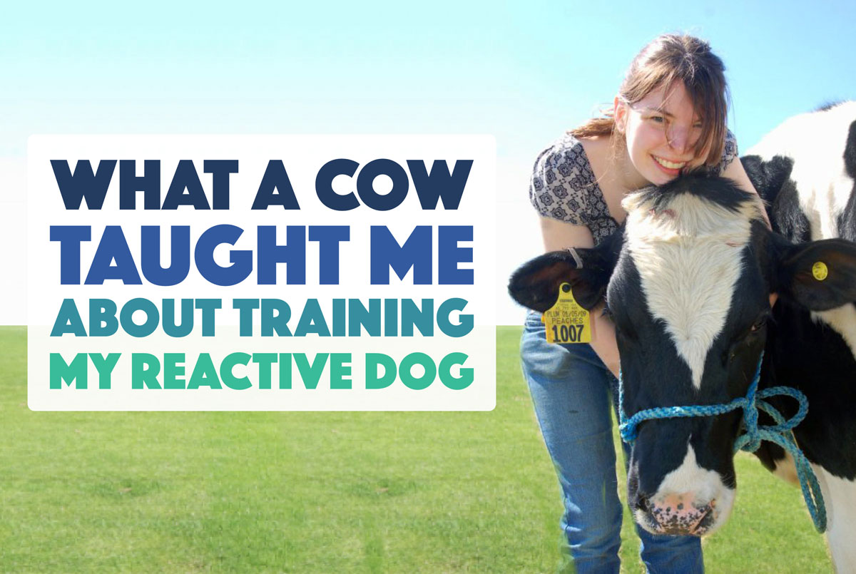 What a Cow Taught Me About Training My Reactive Dog - The