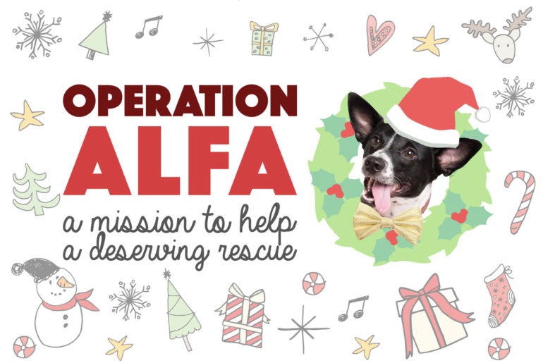 Henry and I are so incredibly grateful for our life together and, as a result, love to put together a charitable project at the holidays. This year, we cooked up up a top secret mission to help the organization we can thank for Henry's life! Without further ado: Operation ALFA!